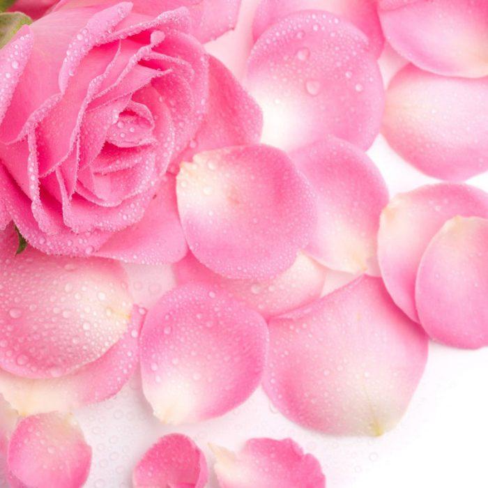 rose Bulgarian